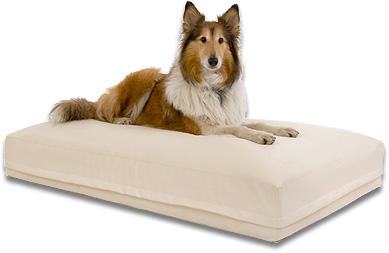 mein hundebetten blog gesunde wasserbetten f r gro e und. Black Bedroom Furniture Sets. Home Design Ideas