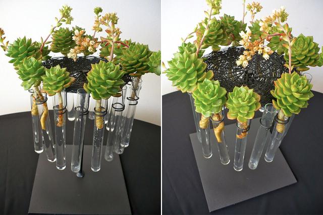 Plantas em tubos de ensaio