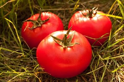 revolusiilmiah.com - Tomat adalah bahan alami pengganti MSG