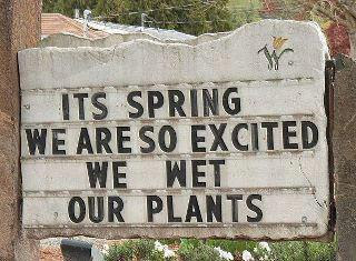 Its Spring, We are So Excited that we wet our Plants