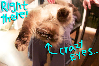 Cat armpits 02
