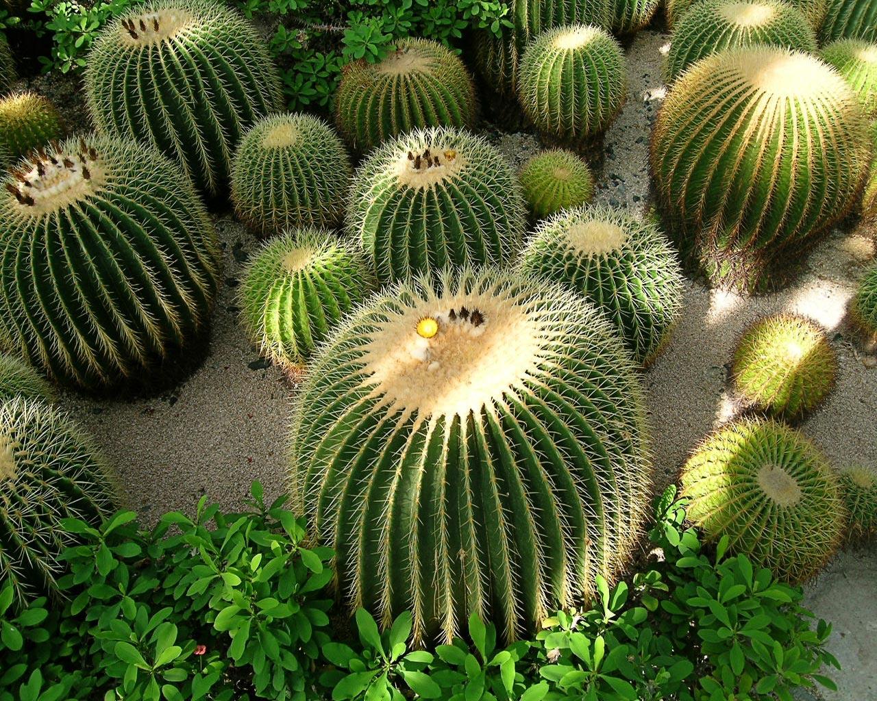 Yan39s Bonsai How To Grow Cactus