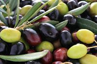 variedades de azeitona