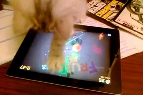 Video Kocak: Kucing Ini Memainkan Game Fruit Ninja di iPad