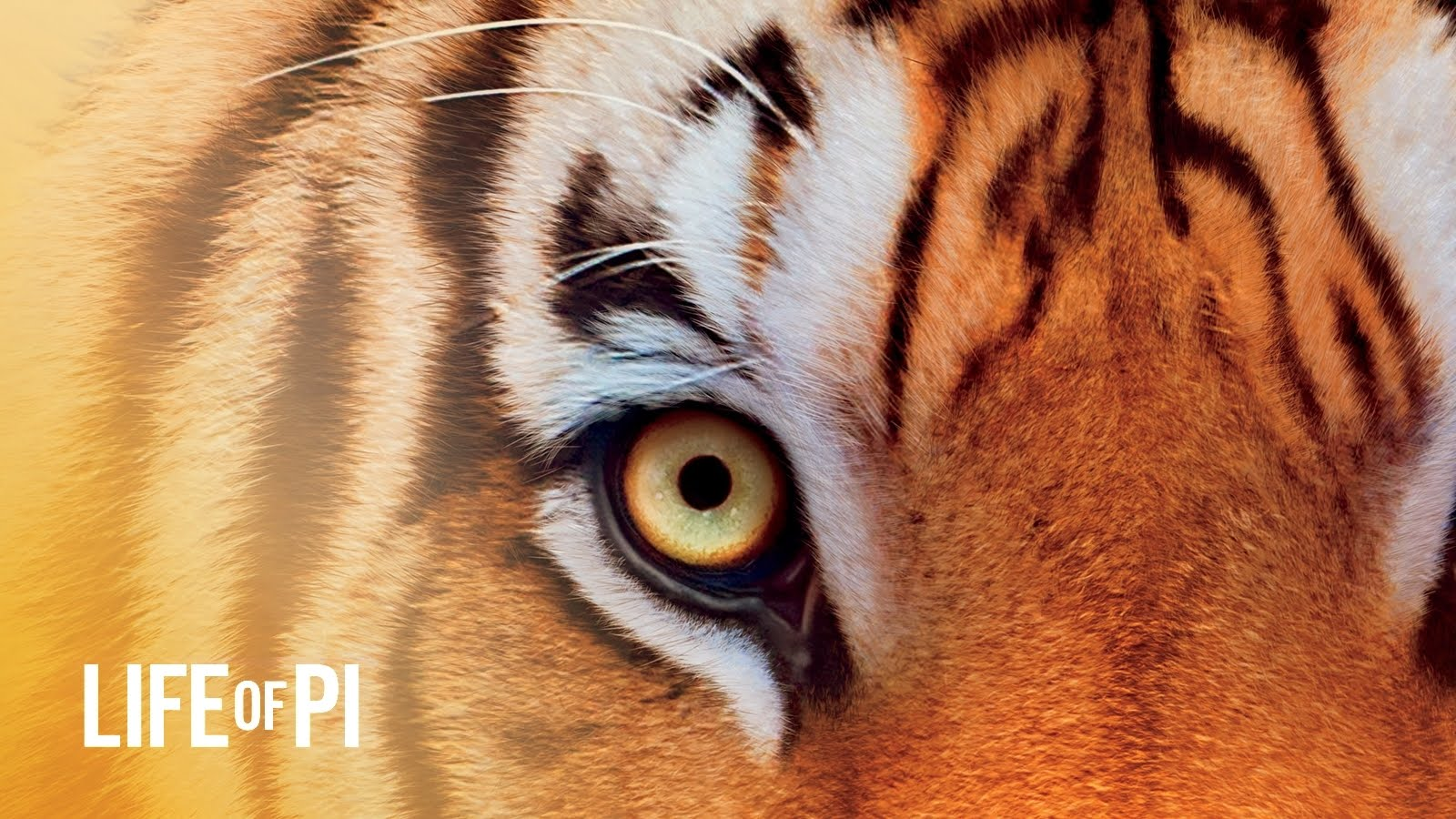http://1.bp.blogspot.com/-qgWZ_C0mahs/UK96nYxmqoI/AAAAAAAATNY/qiU7I-hXpog/s1600/Life_Of_Pi_Wallpaper_tiger_eye.jpg