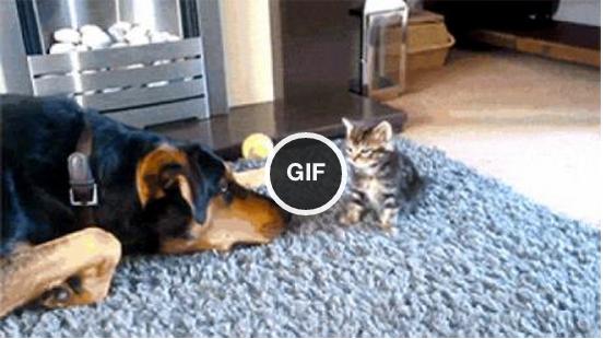 Dog makes fun of kitten