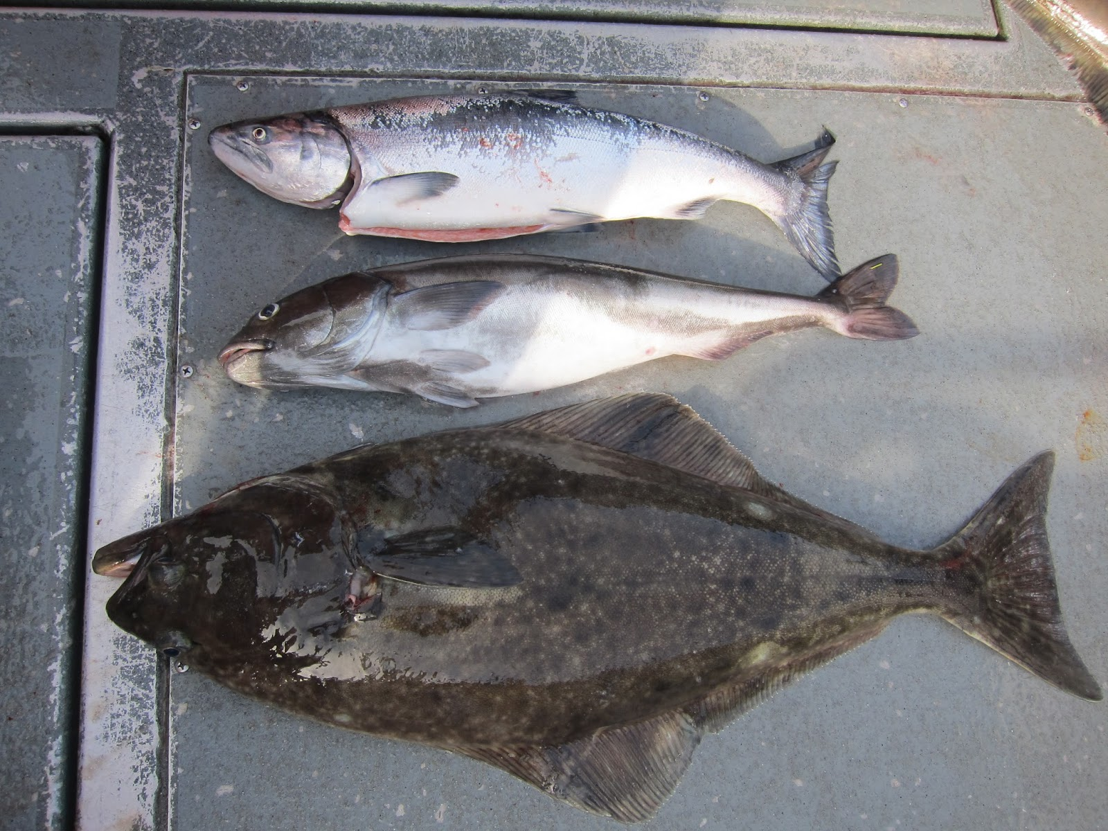 Westport halibut quota autos post for Ilwaco fishing charters