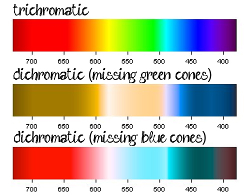 What Color Wavelengths Can Dogs See