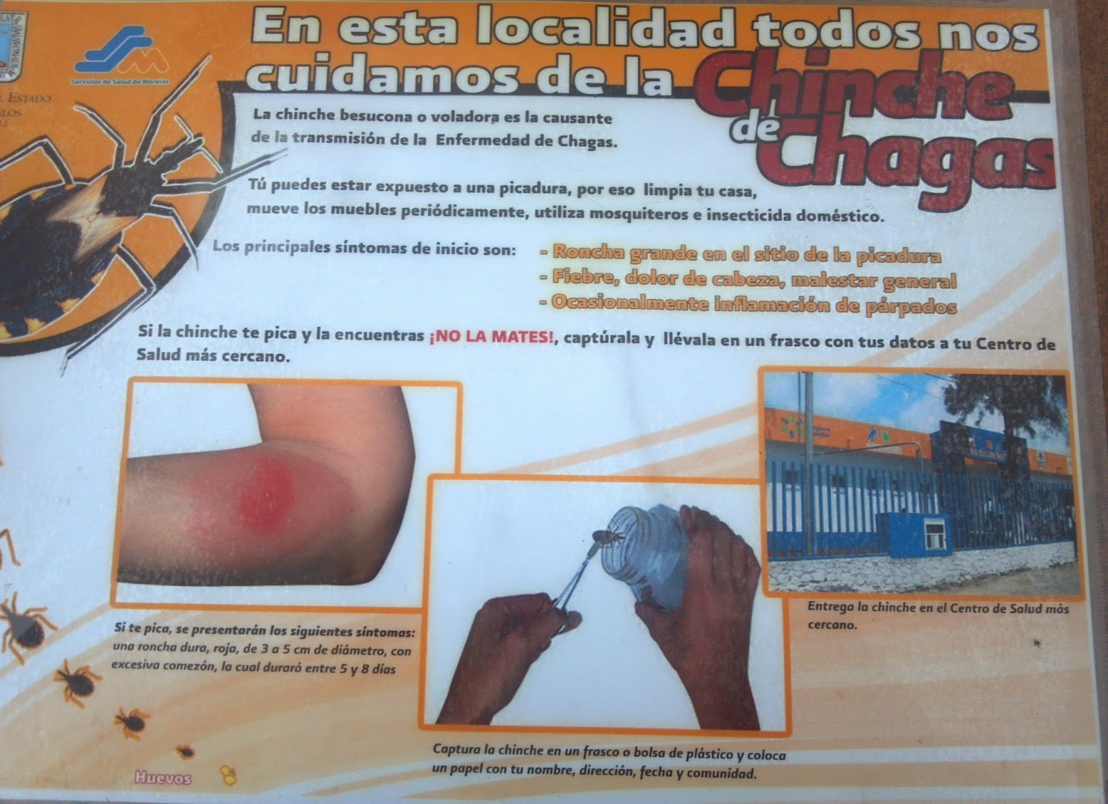 Instituto Tecnologico De Zacatepec Personal De La Jurisdicci N  # Muebles En Jojutla Morelos