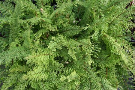 Mantenimiento de jardines verticales jardines especiales - Mantenimiento de jardines ...