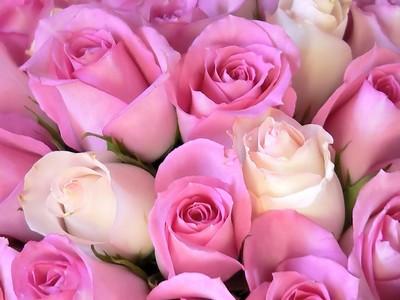 فوائد اللعب الاطفال pink-roses.jpg
