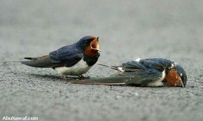 Kisah Burung Pung