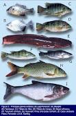 Peixes do Lago