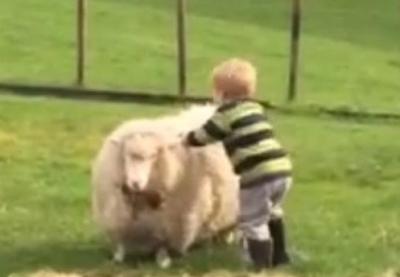 Маленький мальчик оседлал овцу
