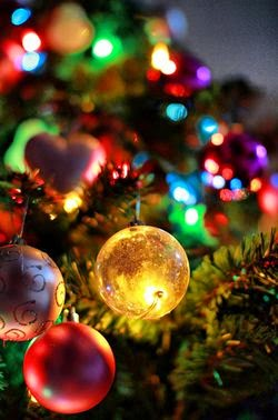 çam ağacı, pagan inancı, noel, yeni yıl
