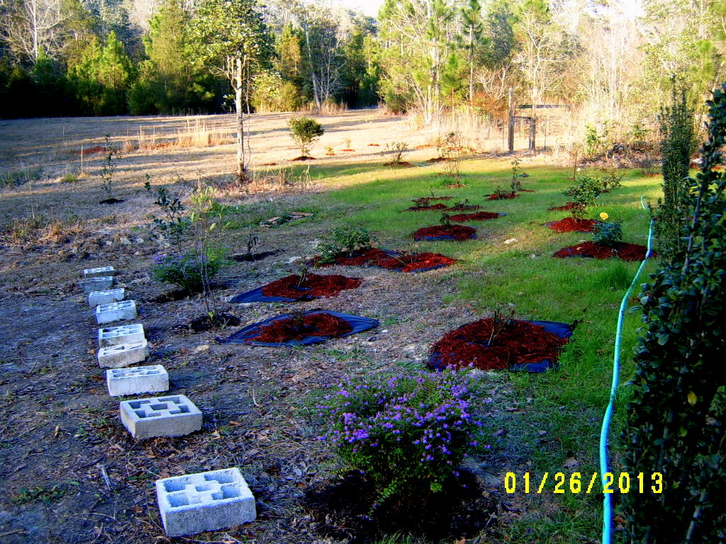 Alabama Rose And Flower Garden From A Non Green Thumb Feeling Accomplished Imagination