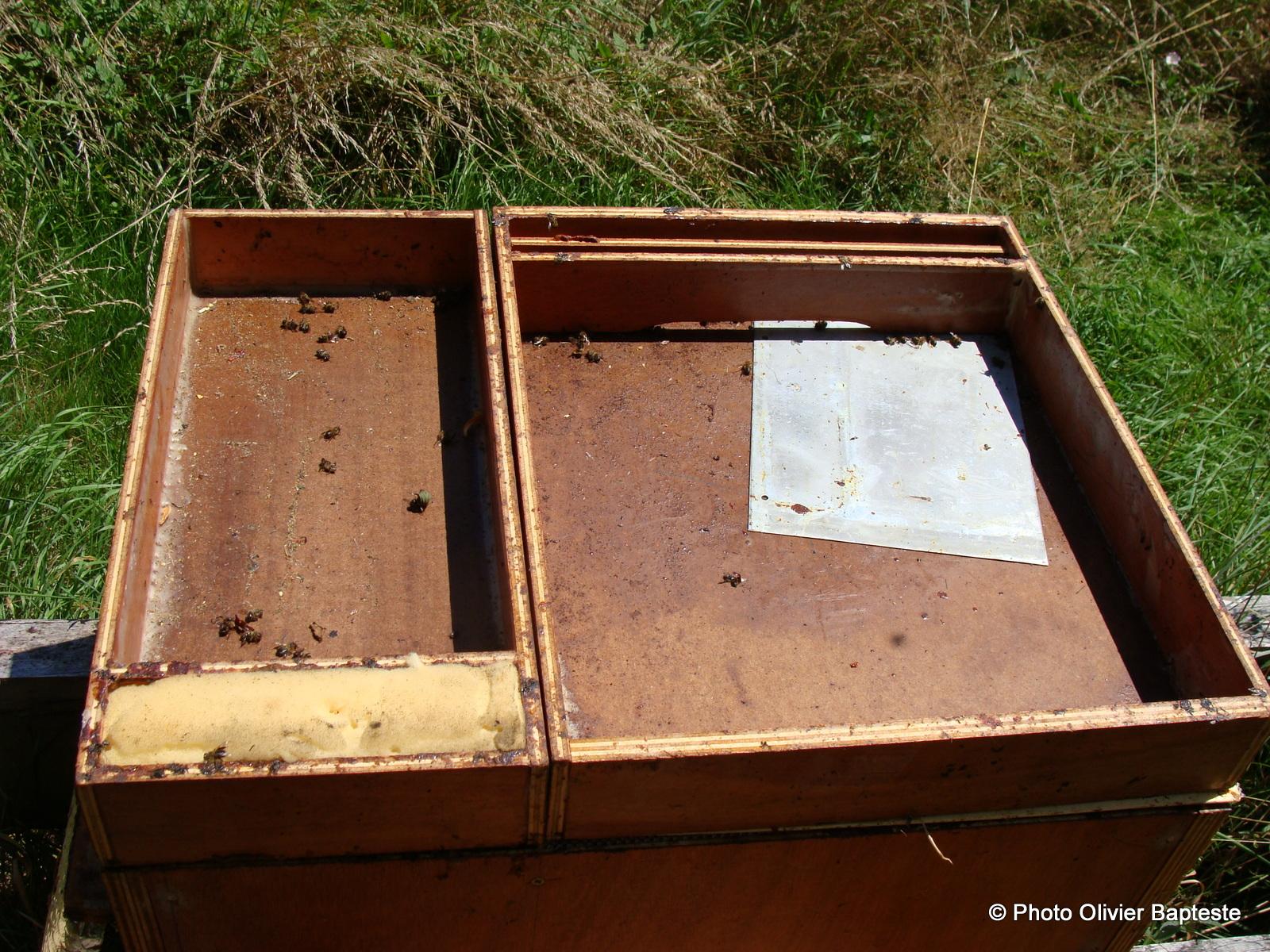 les abeilles d 39 olivier une ruche leveuse. Black Bedroom Furniture Sets. Home Design Ideas