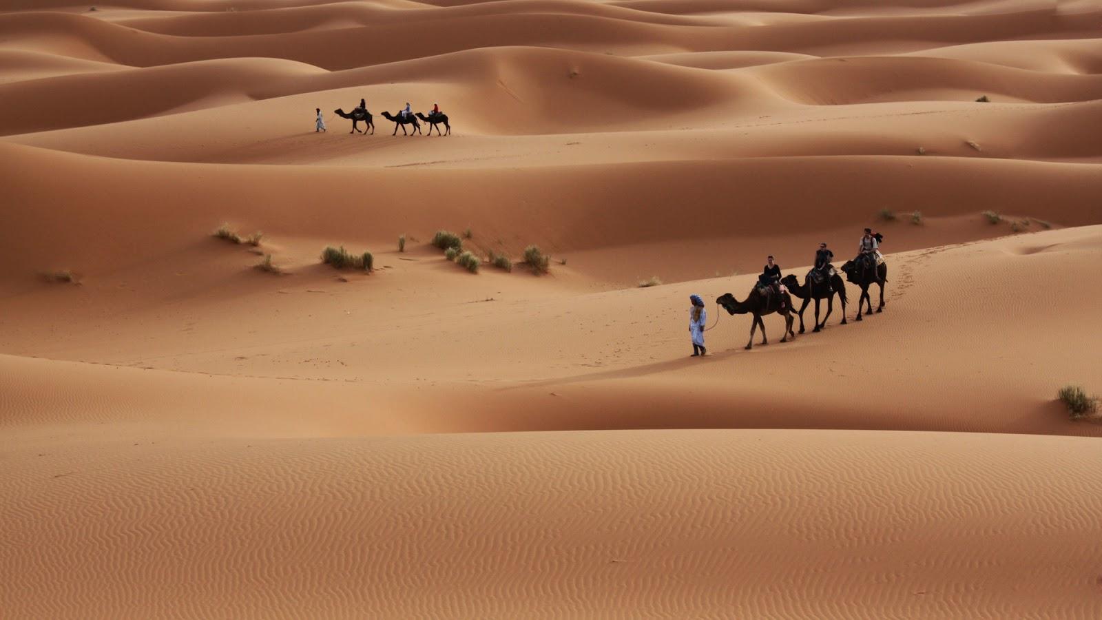 deserts camel images best hd widescreen desktop wallpaper