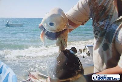 Anak Ikan Yu Bermata Satu