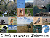 Dónde ver aves en Salamanca
