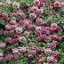 Rose flowers desktop wallpapers.