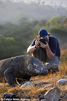 Komodo Island Is The New 7 Wonders Of The World, komodo island, komodo server, komodo dragon, komodo indonesia, komodo dragon eating, komodo dragon attack, komodo