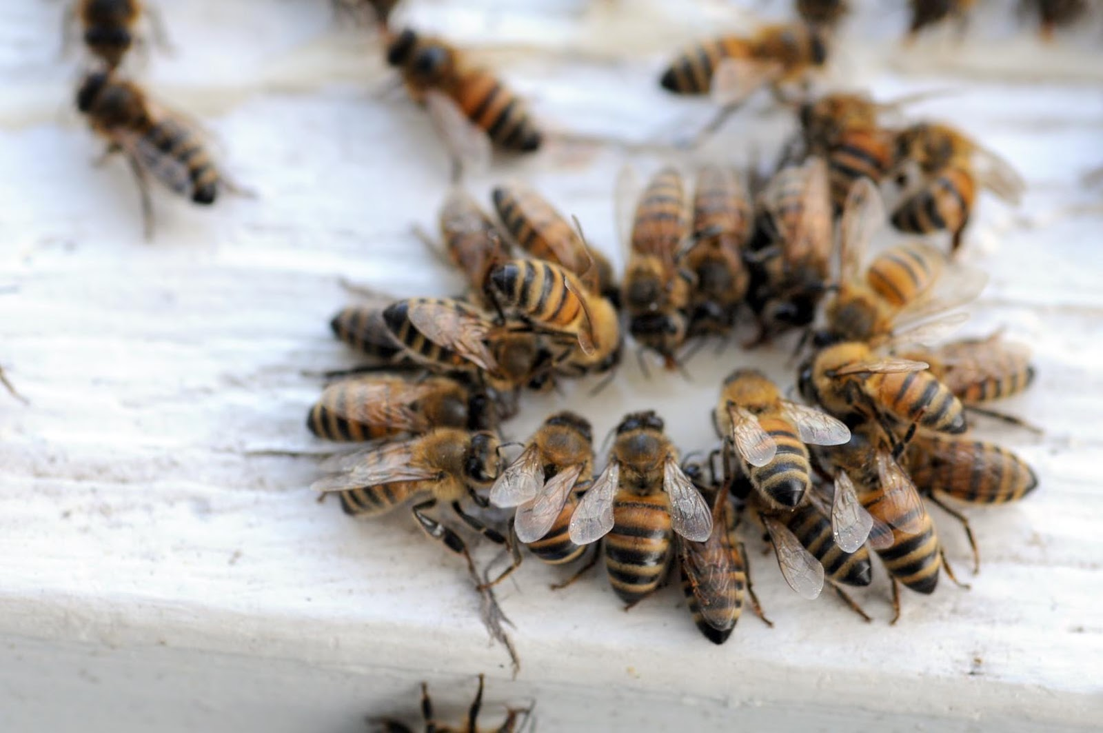 Anatomy Of A Winter Bee Party – Bluegrass Beekeepers Association