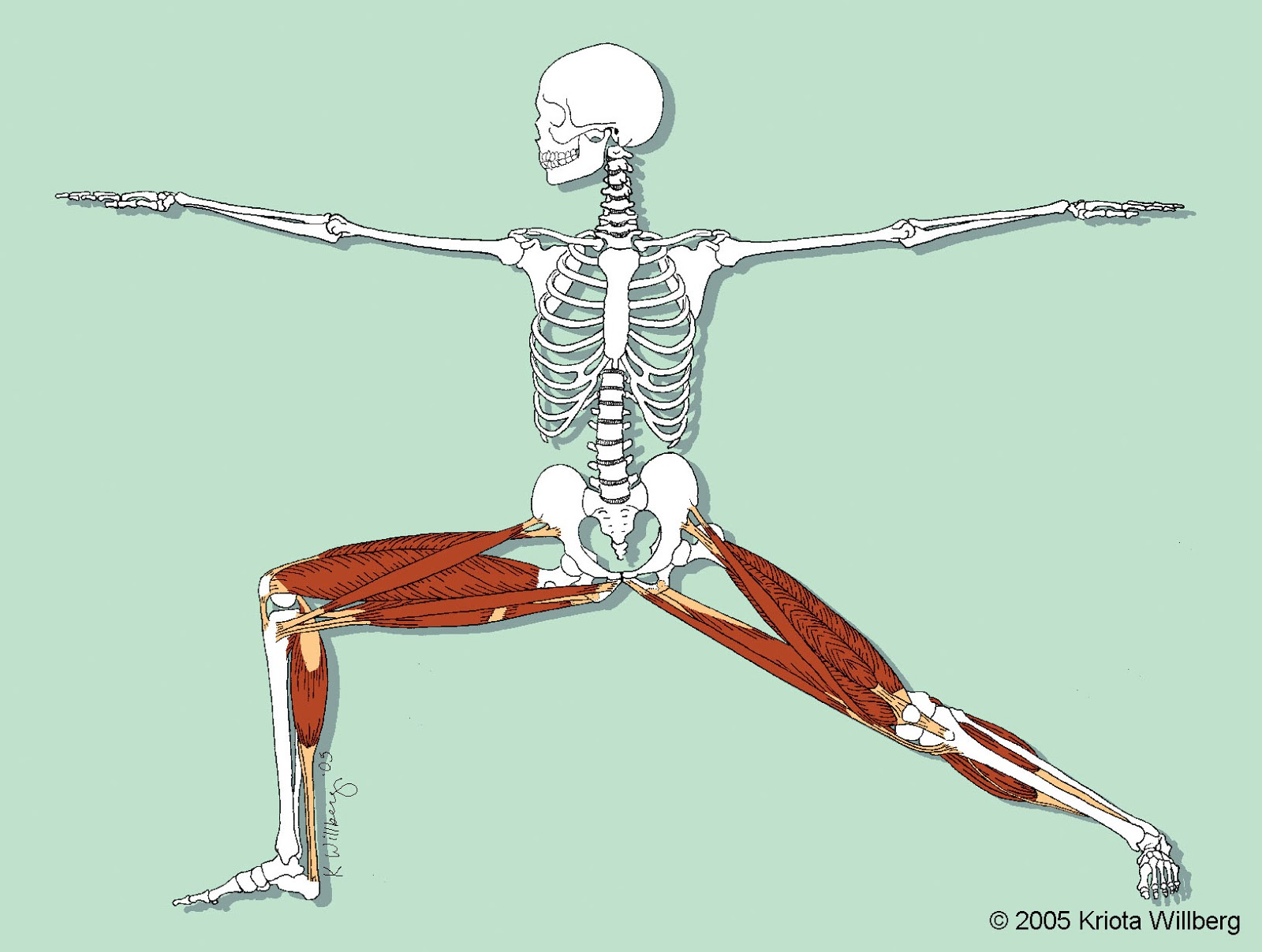 KriotaWelt: ANATOMY FOR YOGA WORKSHOP APRIL 20-21, 2013