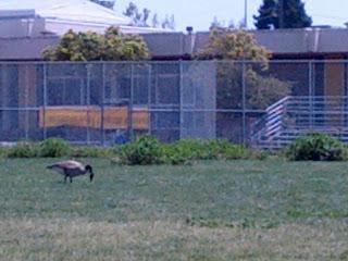Emery Secondary's Fields