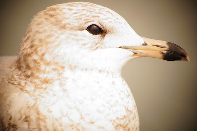 Photo free bird