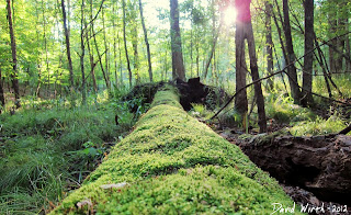 moss on log, swamp, sunlight, forest, michigan