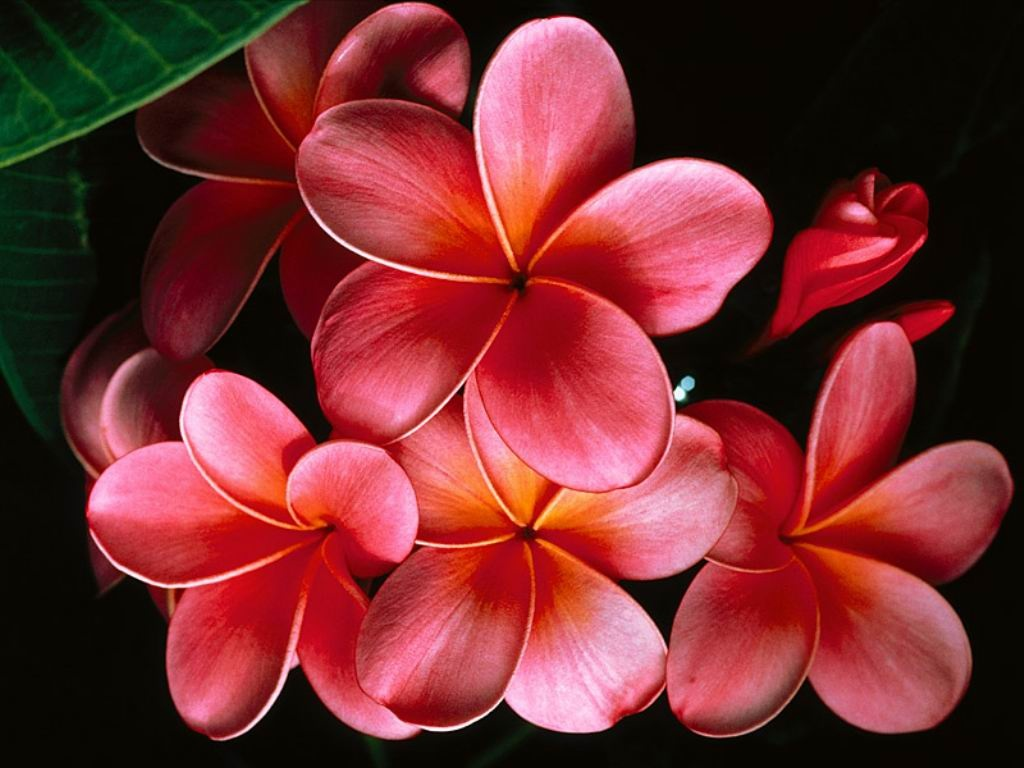 Imagenes De Flores De