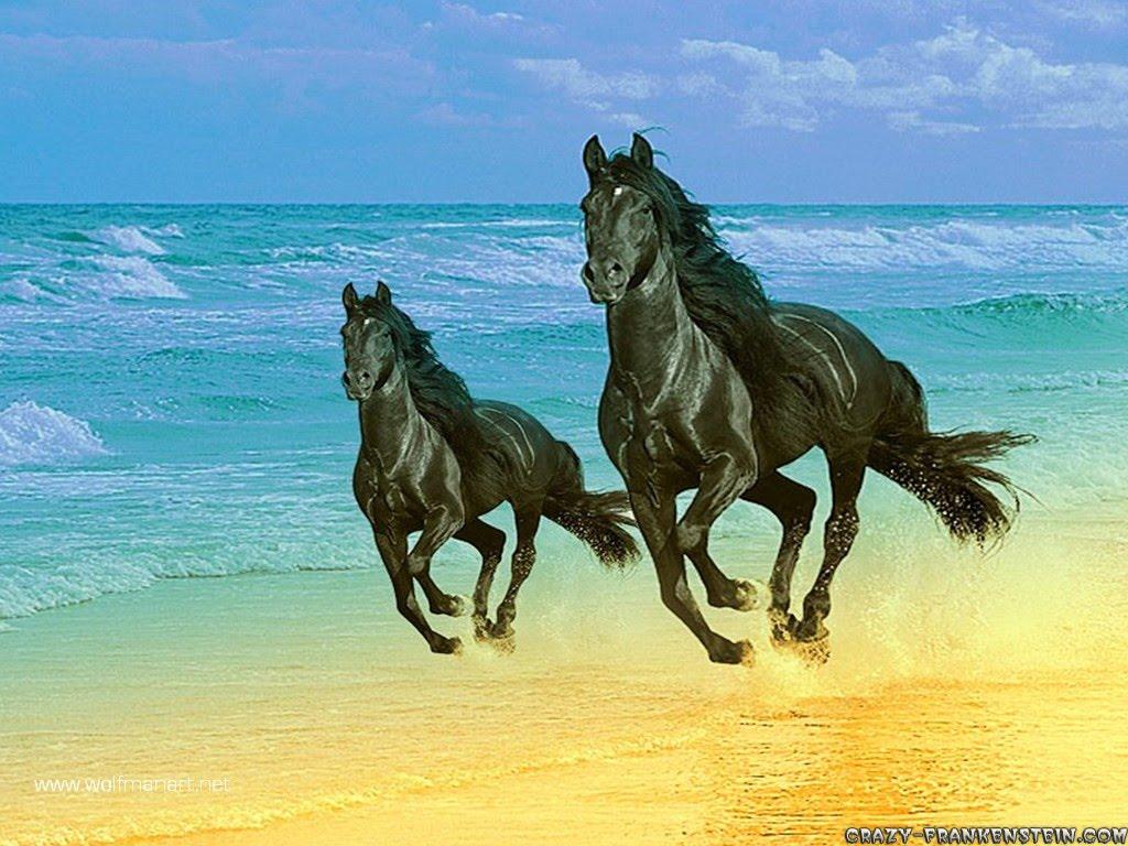 Best   Wallpaper Horse Wall - agal-horse-wallpaper  Pictures_469891.jpg