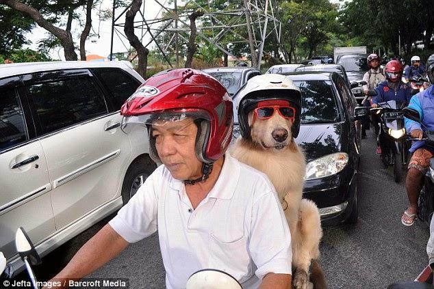 anjing ini suka naik motor