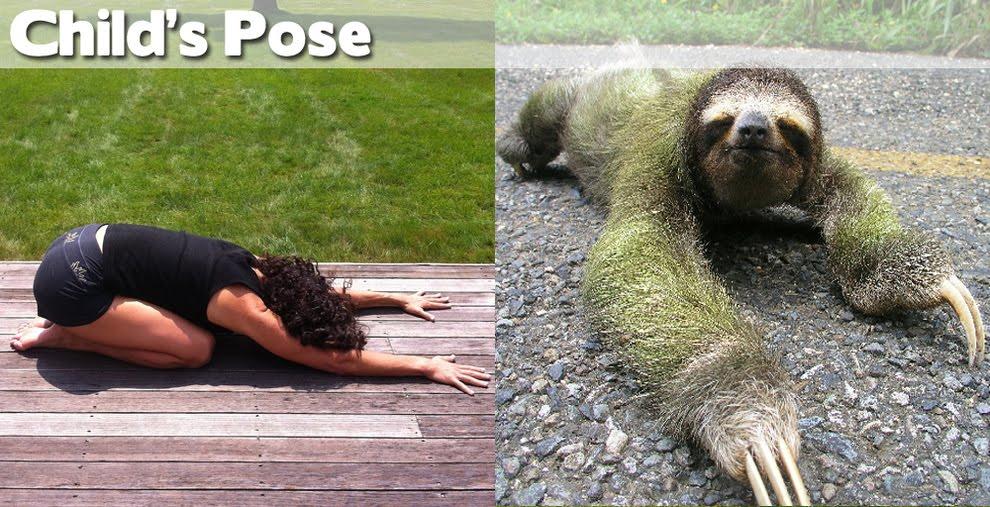 Funny Yoga Animals
