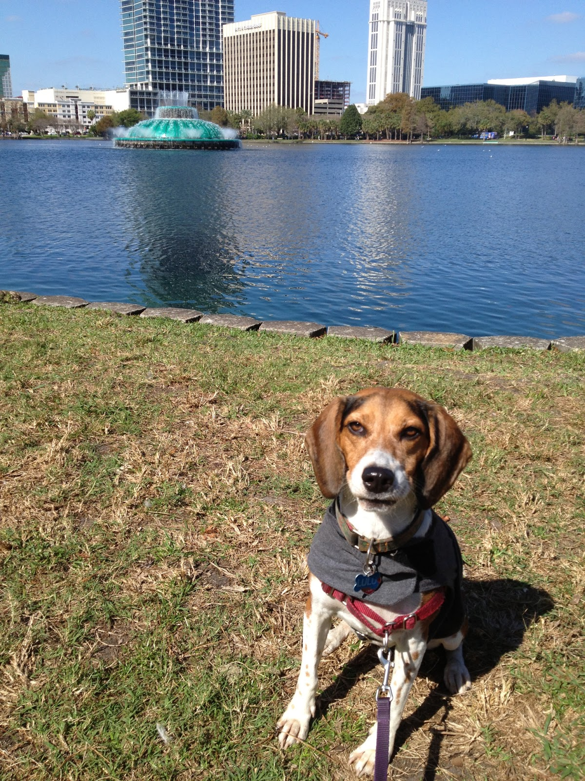 Life With Beagle: Countdown to Global Pet Expo -- Why Orlando is ...