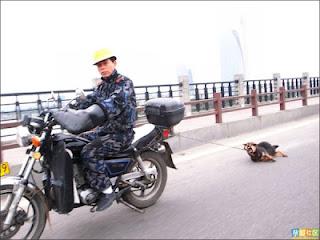 Penyiksaan Anjing Di China