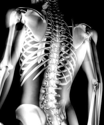 bone structure, health of bone, health tips