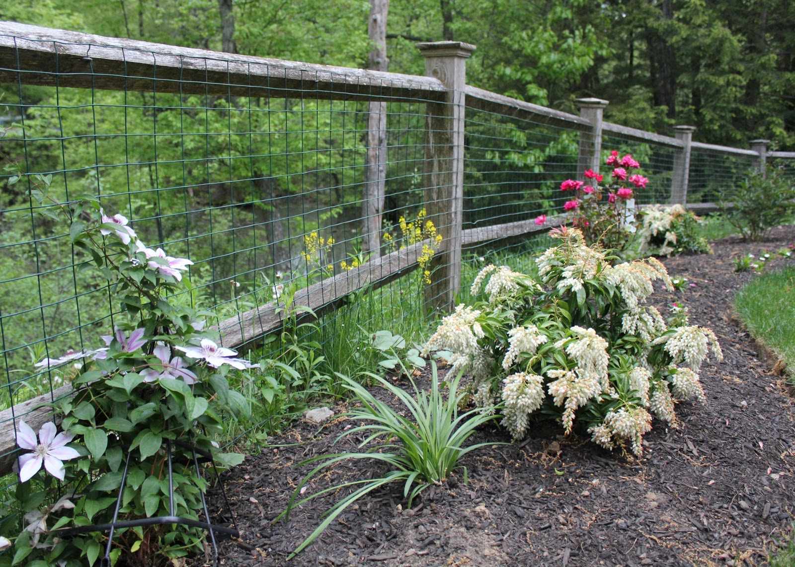 The wildlife garden in the h l blomquist garden of native plants - Beyond This Fenced In Part Of Their Backyard Is A Small Pond Connected To A Wetlands Area While Out Gardening We Get To Enjoy Seeing Some Of The Wildlife
