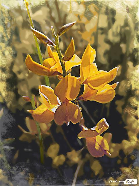 flor silvestre campo
