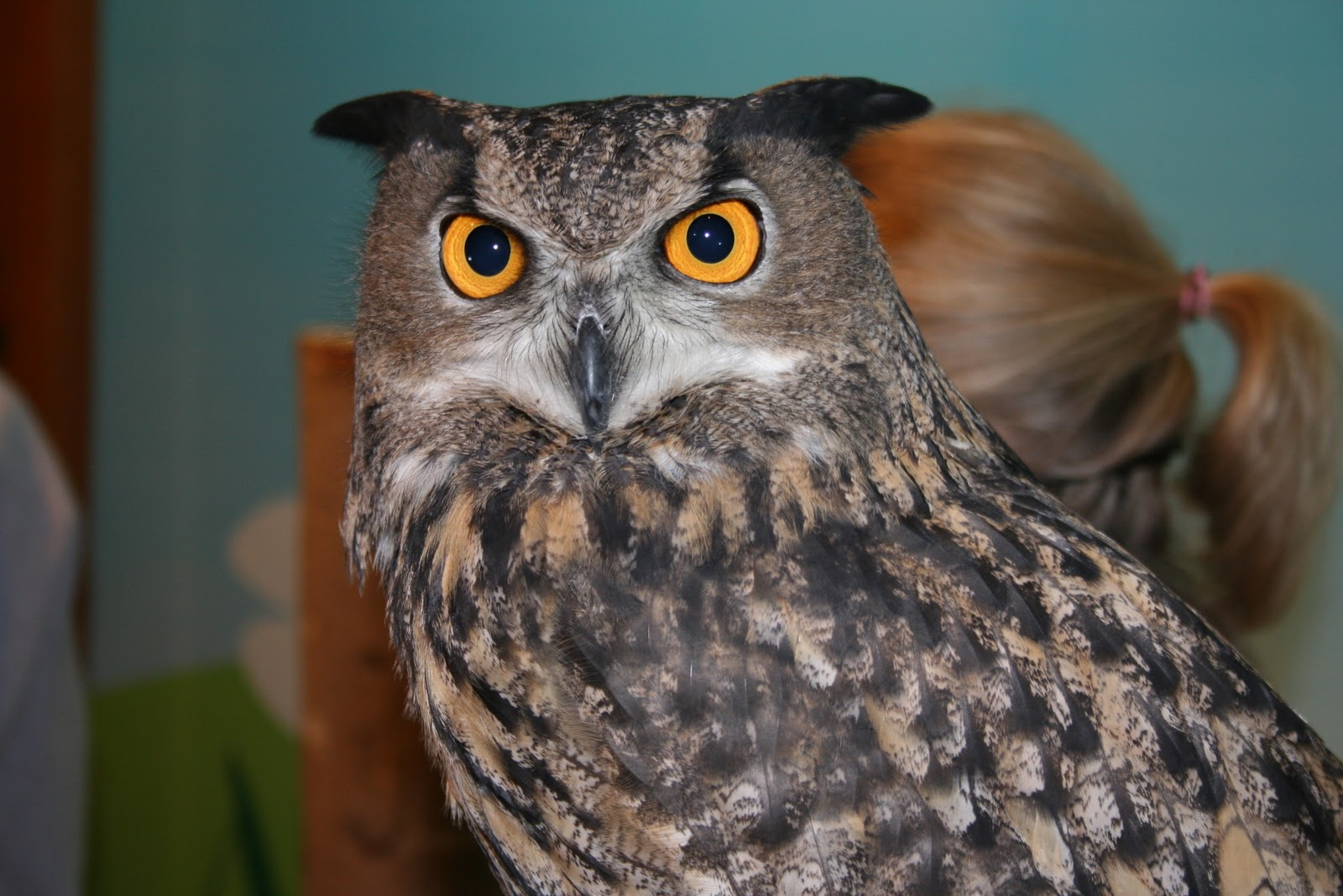 tennessee aquarium blog whooo u0027s afraid of the dark try these owl