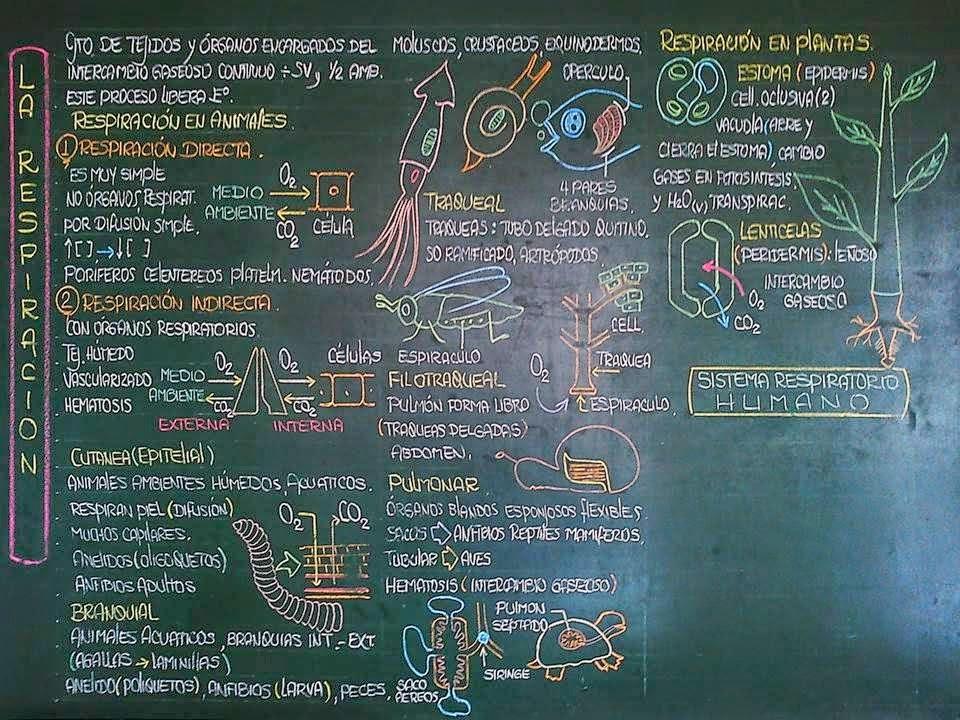 Biología didáctica: Ingeniería - BIO: Anatomía comparada ...