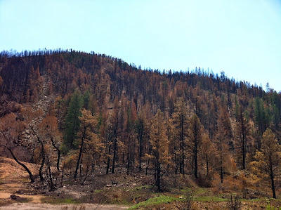 High Park Fire damage 2012 Highway 14, Cache La Poudre river www.thebrighterwriter.blogspot.com