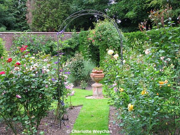 Enjoy the heady scent of British roses ... and two new rose gardens ...