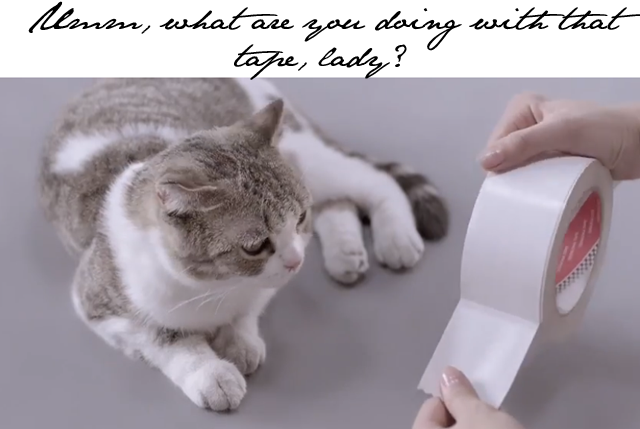 Kotex uses cats and tape to sell product