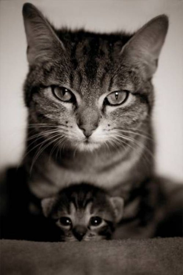 cat pictures, cat photos, momma cat and kitten