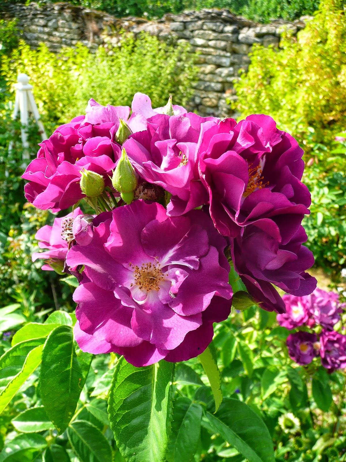 Notre jardin secret le jardin en juillet for Jardin 5 juillet biskra