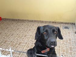 Apolo.. meu cãozinho...amooo muito!!!