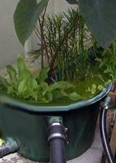 Separate pond veggie filter