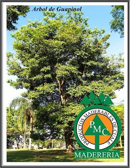 arbol-de-coapinole-guapinol-productos-maderables-de-cuale-vallarta